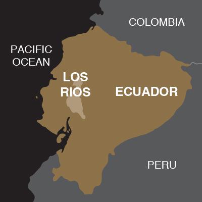 Ecuador LosRios Gianduja-02
