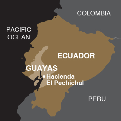 Ecuador Pechichal-02