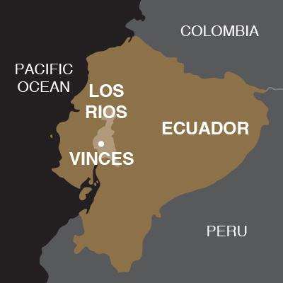 Ecuador Vinces-02
